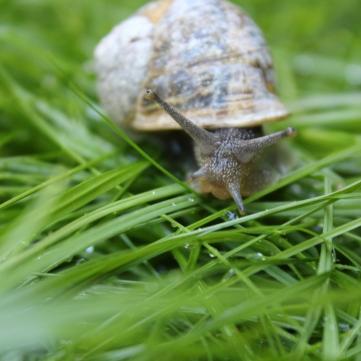 Un escargot parisien en cavale