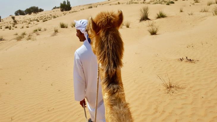 Dubai - chameau dromadaire - Desert - dunes - Voyage - LeCharmeElectro