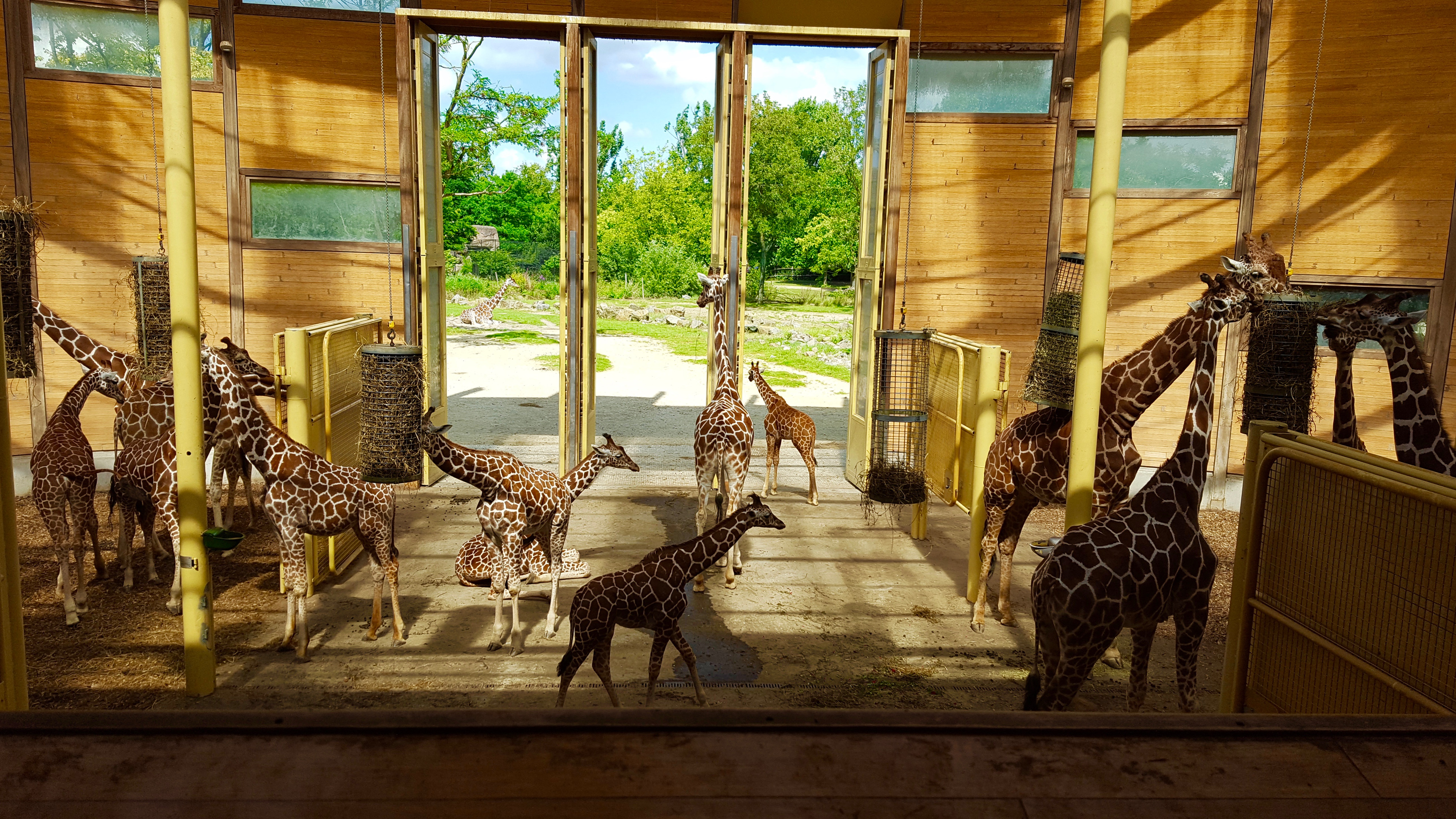 Visite Rotterdam - Zoo Centre Ville